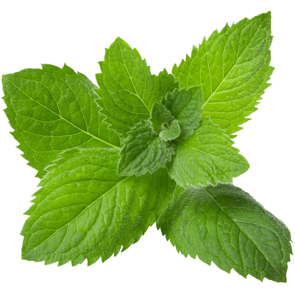 Spearmint Essential Oil - alter8.com