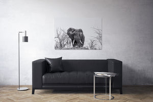 Elephant on a Hill Black and White Canvas Print - Photos by Petrus Bester