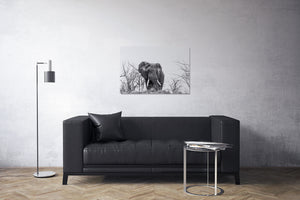 Elephant on a Hill Black and White Canvas Print | Photos by Petrus Bester