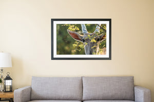 Eland Portrait Framed Poster Print | Photos by Petrus Bester