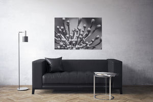 Flower Buds Black and White Canvas Print | Photos by Petrus Bester