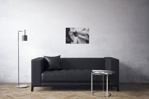 Flower Petals Black and White Canvas Print | Photos by Petrus Bester