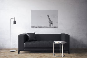 Melvin the Giraffe Black and White Canvas Print | Photos by Petrus Bester