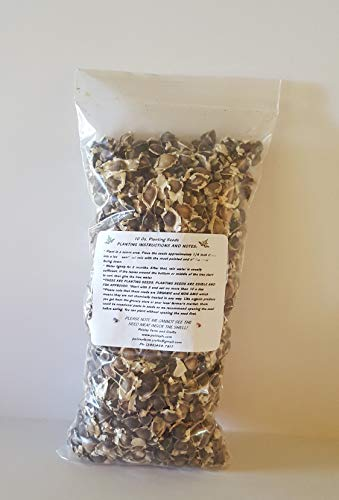 10 oz (Apx 1000) Moringa Malunggay Drumstick Seeds - Paisley Farm and Crafts : Garden & Outdoor