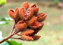 Load image into Gallery viewer, Annatto Ground - $1.96/lb - 50/lb case - Free Delivery
