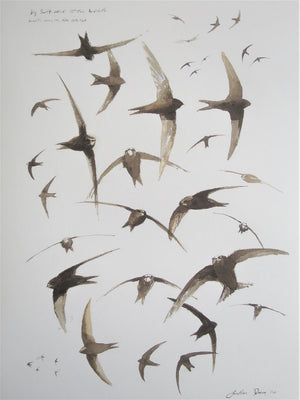 Swift Studies Print
