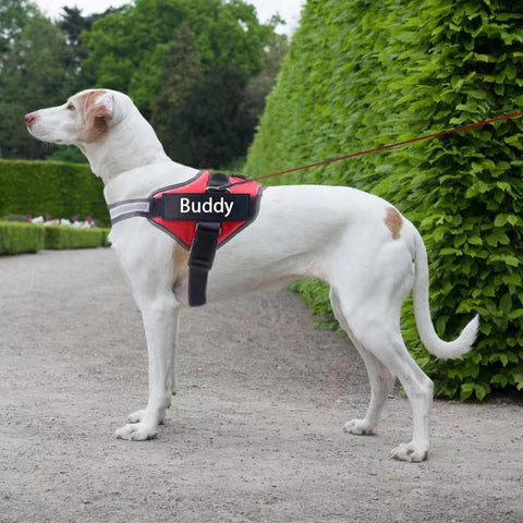 Personalized DoggyShop® No Pull Dog Harness