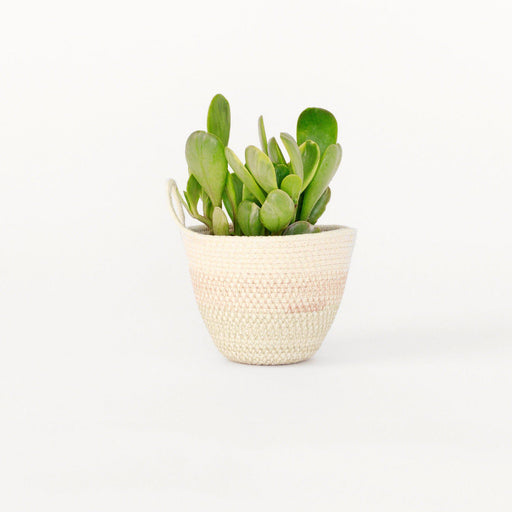 Mini Woven Planter-Mokun-Jute Stripe-Crying Out Loud