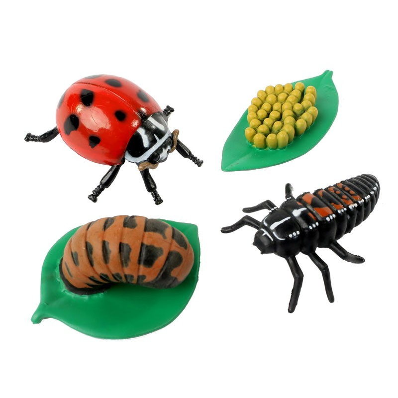 Life Cycle Stages - Ladybug
