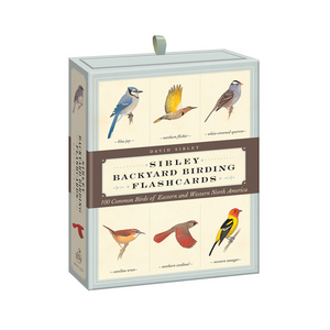 Sibley Backyard Birding Flashcards by David Sibley