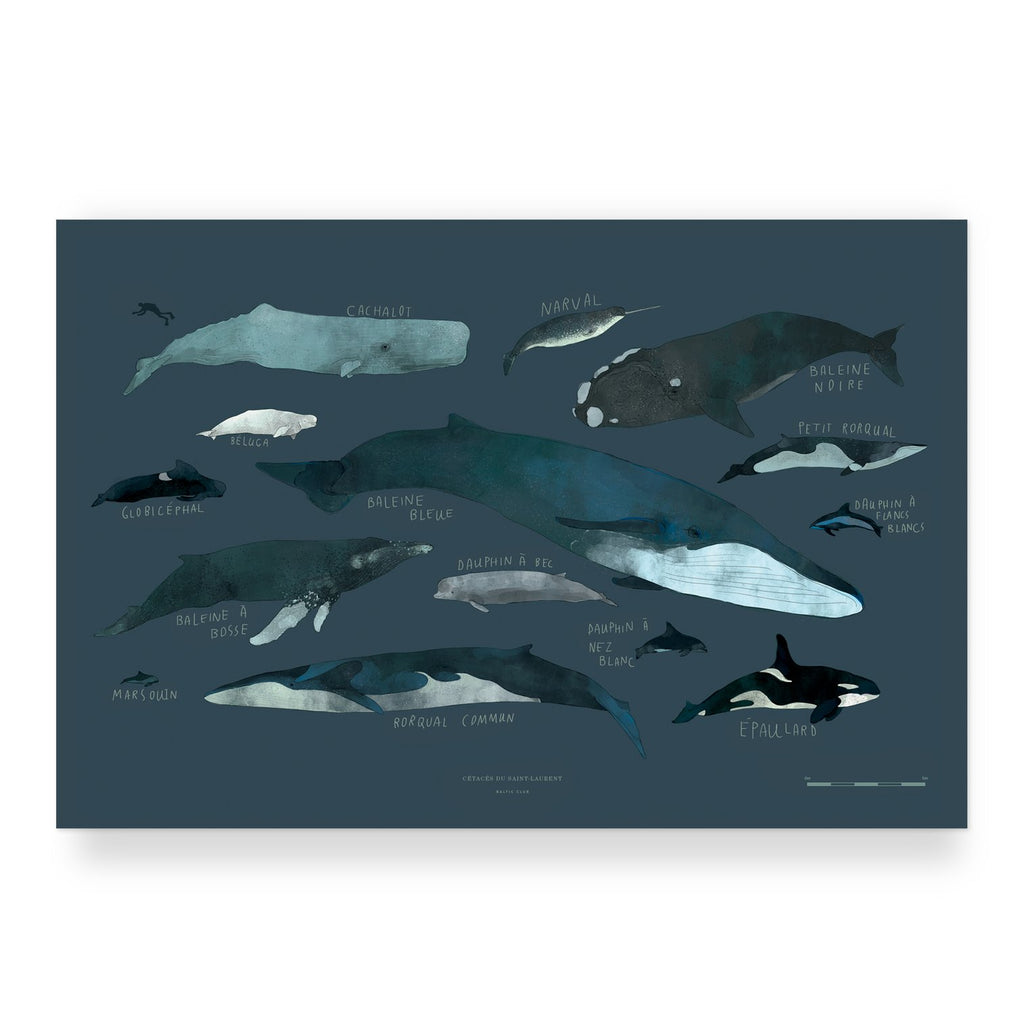 "Baltic Club - Whales 12x18"" Art Print"
