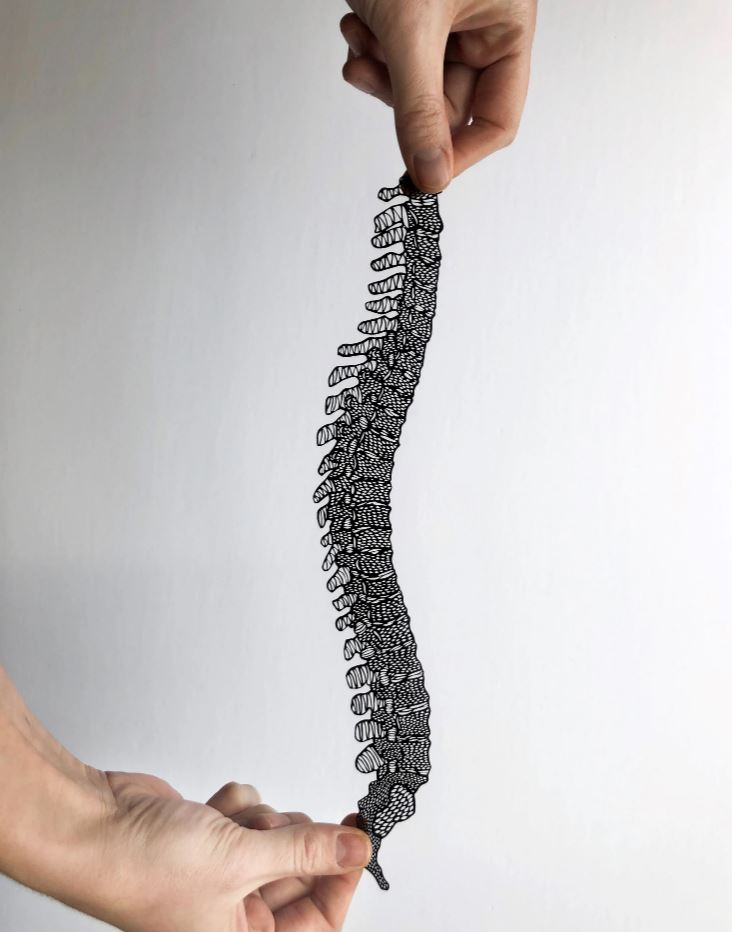 Light + Paper Studio - ANATOMICAL SPINE PAPERCUTTING ARTWORK