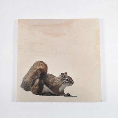 Resurfaced - Squirrel Wood Print 8x8""