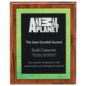 Vivid Acrylic Plaque - Green freeshipping - The Trophy Superstore