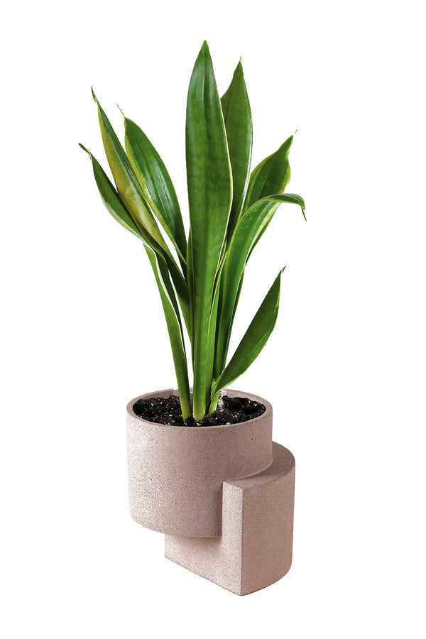 Medium Platform Planter in Coral | Tortuga Living