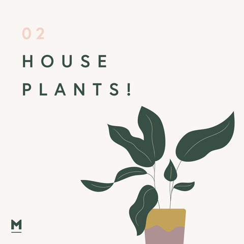 House Plants - wellbeing in the home graphic