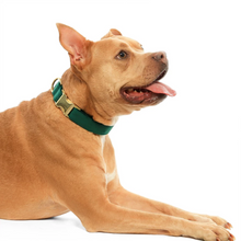 Load image into Gallery viewer, Forest Green Velvet Dog Collar