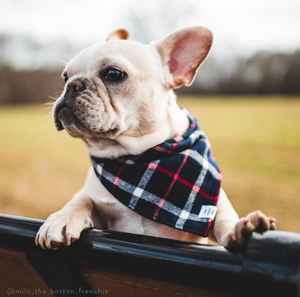 Oxford Plaid Flannel Dog Bandana
