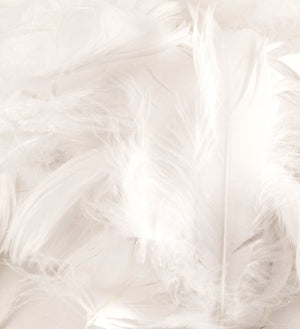 "White 1st Grade Marabou Feathers - Mixed Sizes 3"" - 8"" - Eleganza - Button Blue Crafts"