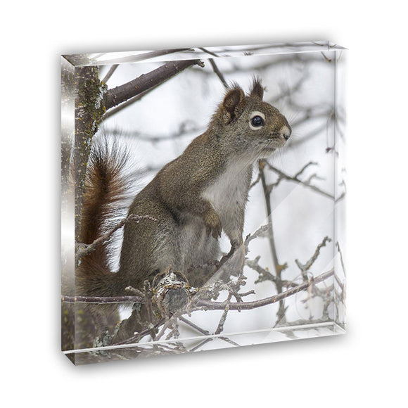 Winter Forest Tree Squirrel Acrylic Office Mini Desk Plaque Ornament Paperweight