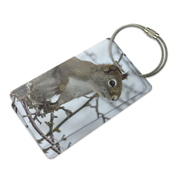 Winter Forest Tree Squirrel Suitcase Bag ID Luggage Tag Set
