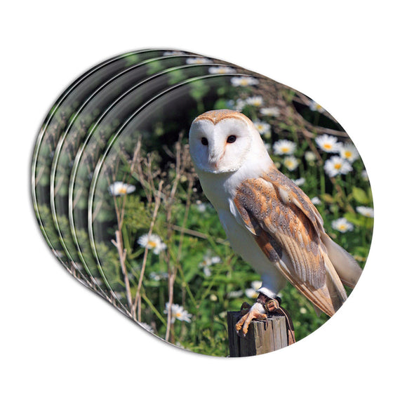 Barn Owl Acrylic Coaster Set of 4