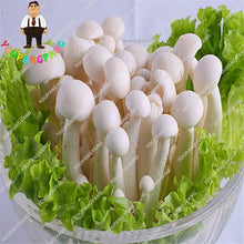 50pcs/bag Mushroom Seeds Organic Funny Succlent Plant Edible Health Seeds Vegetables  Seeds For Happy Farm Free Shipping
