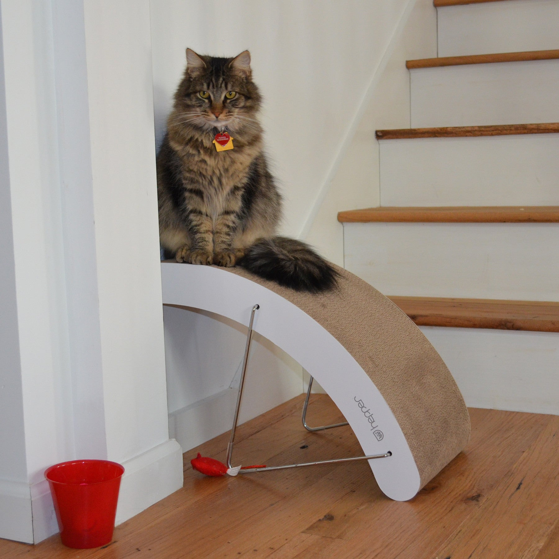 Best carpet cat scratching post carpet review - Modern cat scratcher ...