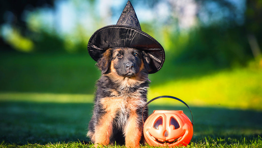 Pupdate Blog, Bryan Bark Park, Dog Safety Candy, Dogs Halloween Candy