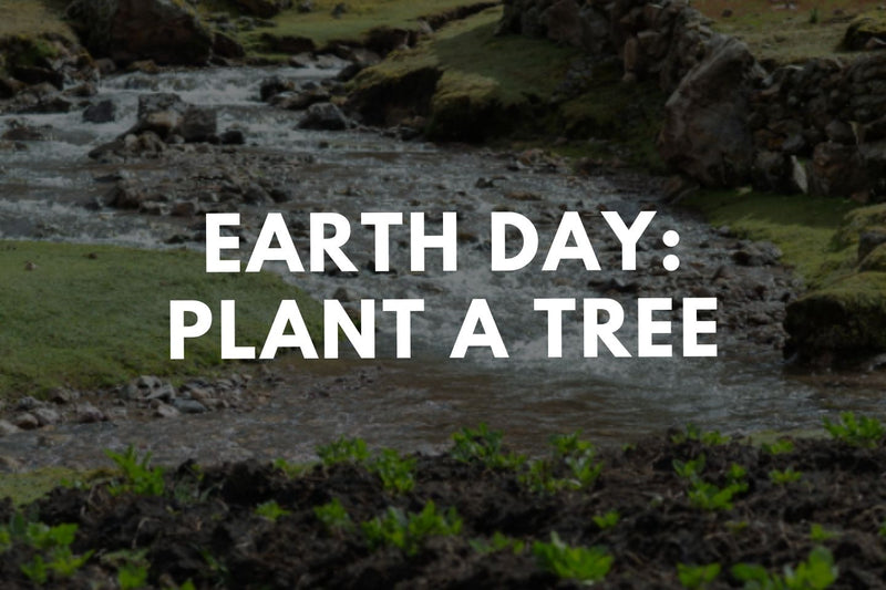Earth Day: Plant a Tree