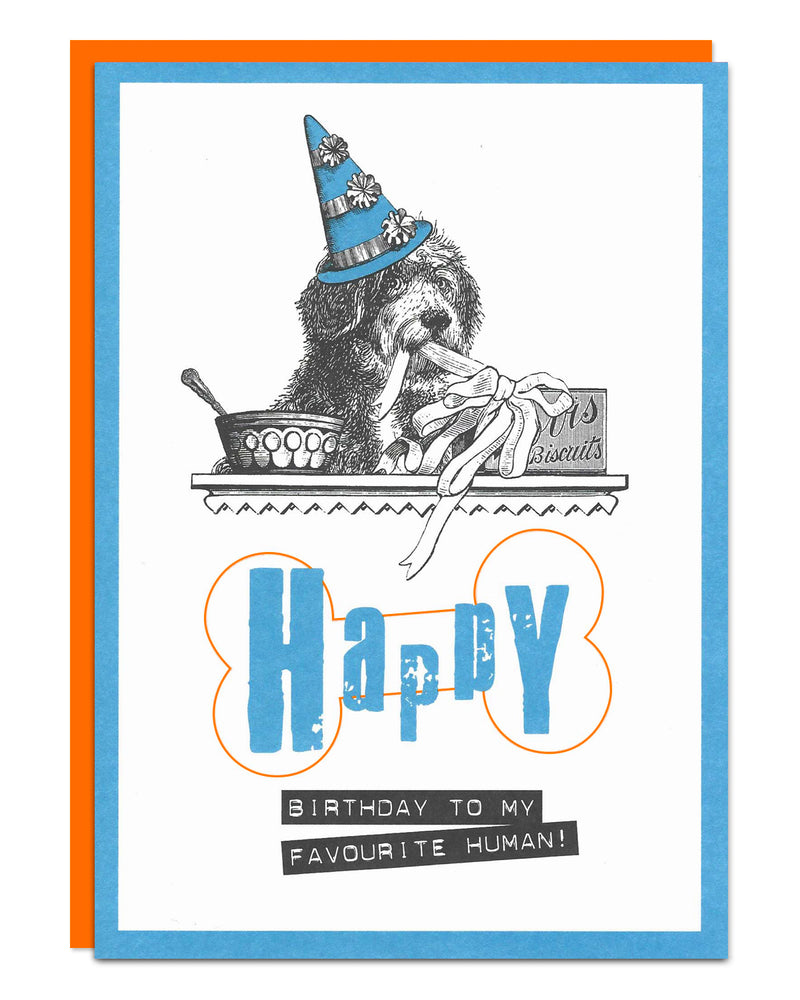 'Happy Birthday to my favourite human!' illustrated Bearded Collie birthday card
