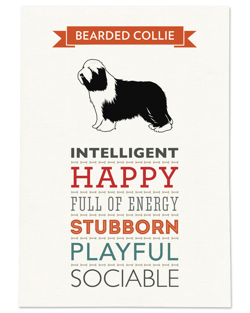 Bearded Collie Dog Breed Traits Print