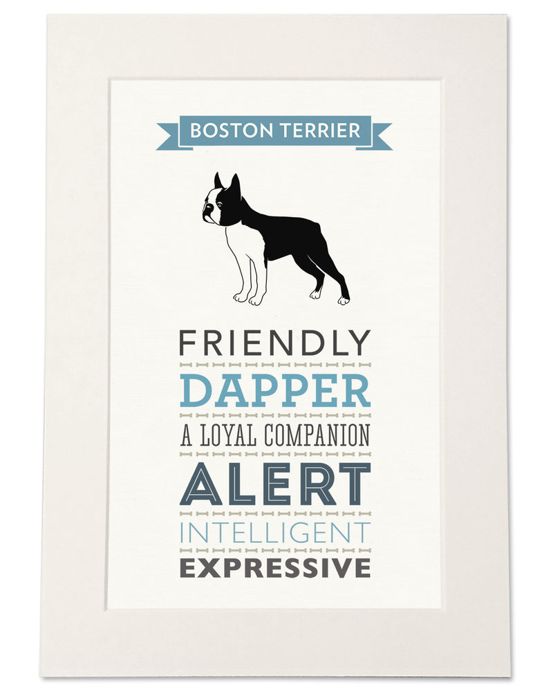 Boston Terrier Dog Breed Traits Print