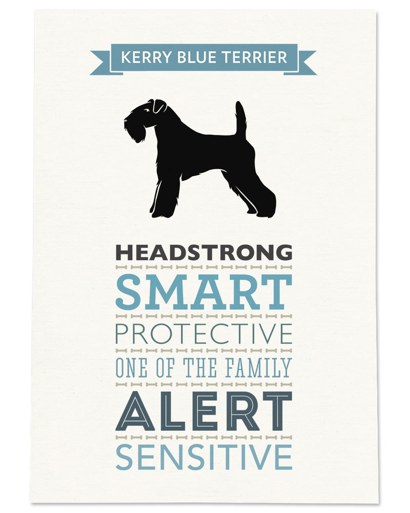 Kerry Blue Terrier Dog Breed Traits Print