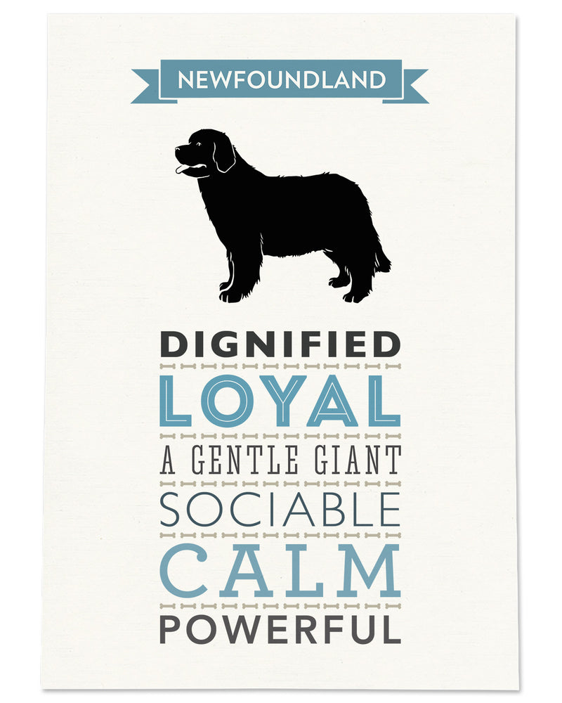 Newfoundland Dog Breed Traits Print