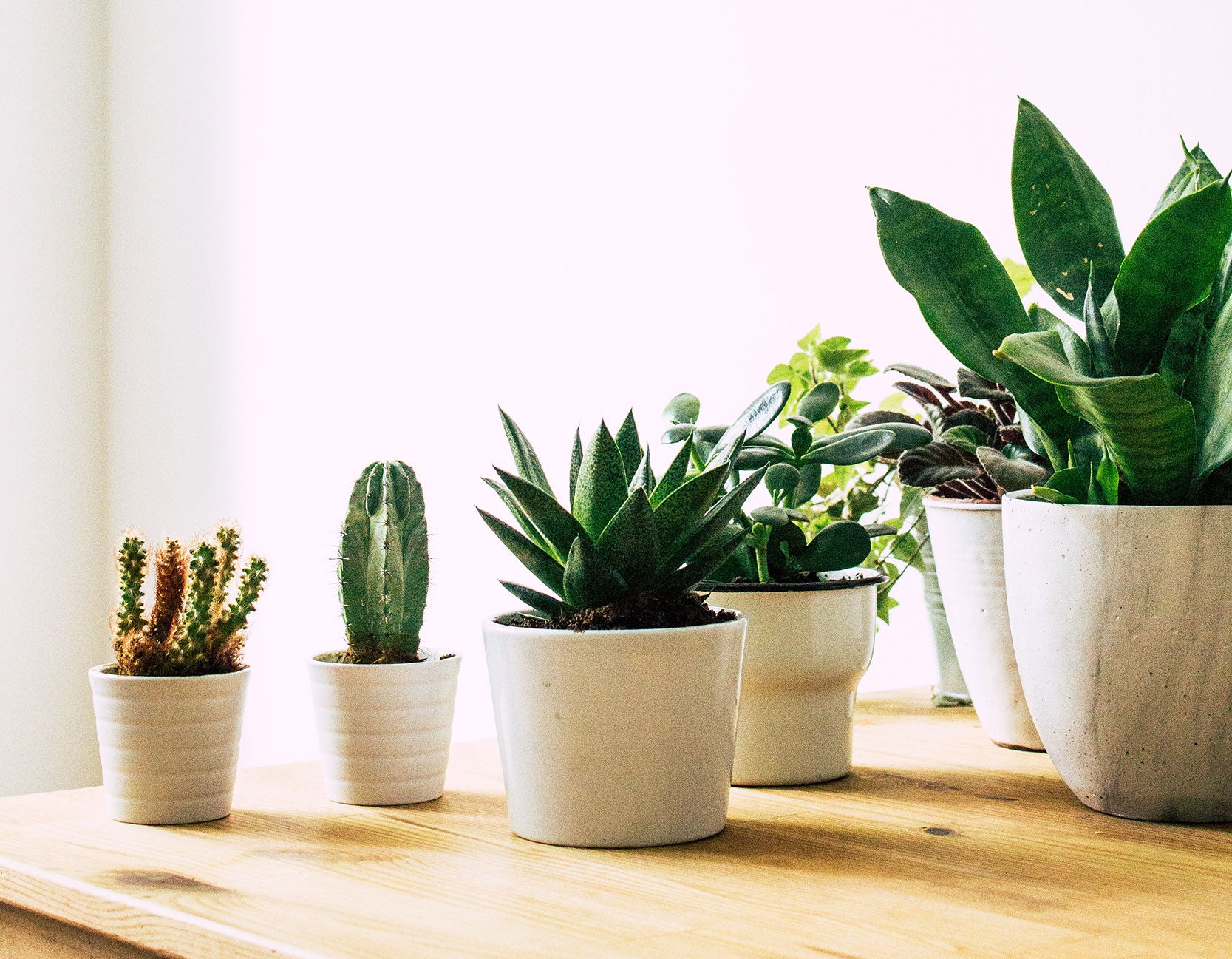 5 Stylish House Plants that Help Clean the Air in your Home