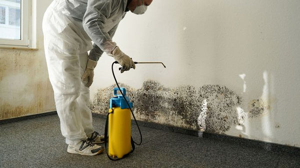 Toxic mold removal in home