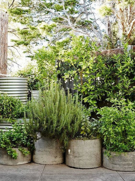 Outdoor plants in pots for your yard