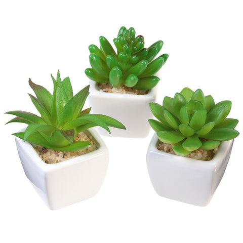 Artificial Succulents - Oddites