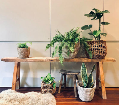 First time plant parent, find your perfect plant match