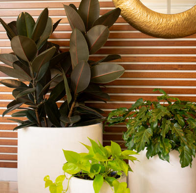 Highlight Plants for your Green Indoor Oasis