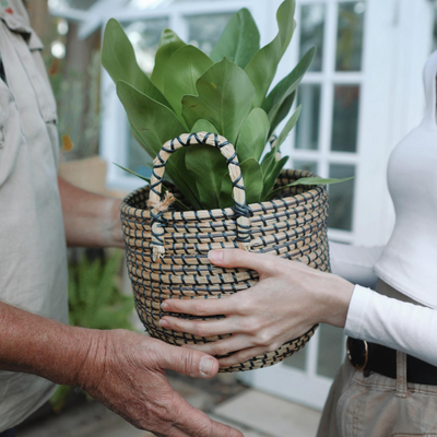 Spoil dad this father's day with a plant gift from Gro