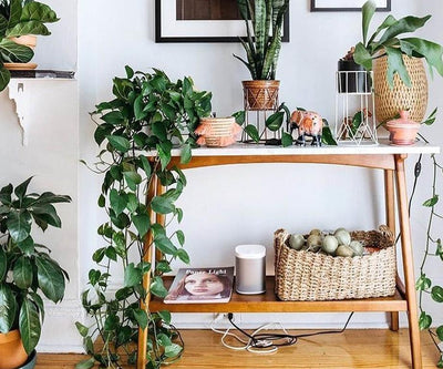 The Best Indoor Plant For You, According To Your Star Sign