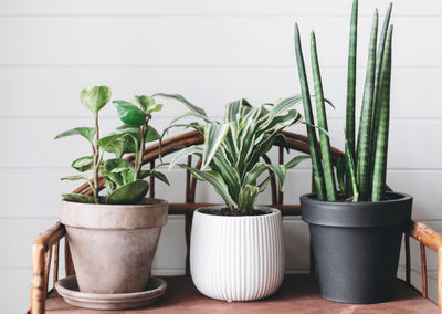 Indoor Plant Care 101