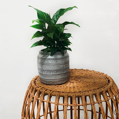 Cairo Pot White Washed Putty - Gro Urban Oasis