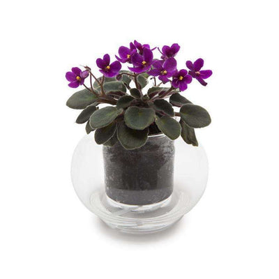 Clear Glass Pot - Gro Urban Oasis