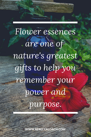 Flower essences are nature's gift to us, a way for us to carry the higher frequencies in our being so that we can release restrictions and return to balance physically, mentally, emotionally, and spiritually. ⁣ Read more to discover how nature can support you to discover your power and purpose.