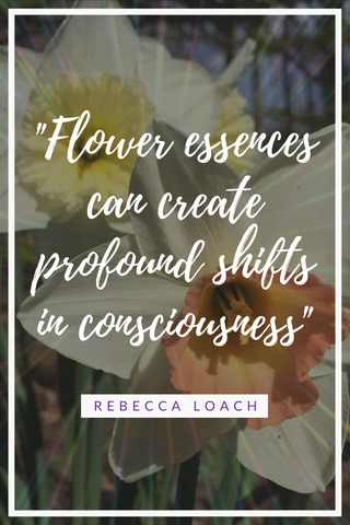 The first time I created a flower essence, I was very skeptical that it would even work. What I experienced was profound and life changing. Read the full story here and learn how flower essences can help you too.