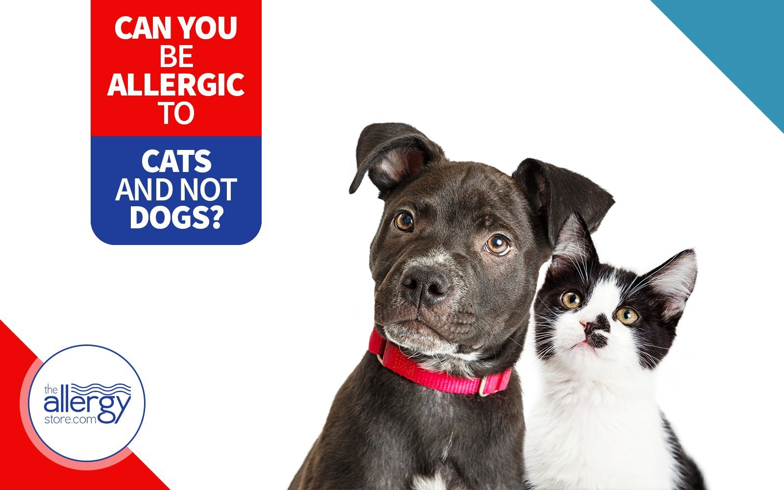 Can You Be Allergic to Cats and Not Dogs?