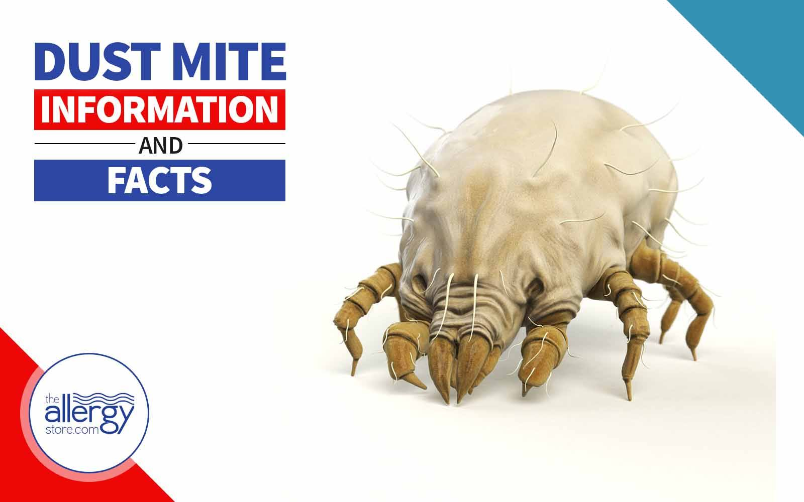 Dust Mite Information & Facts - Know the Enemy